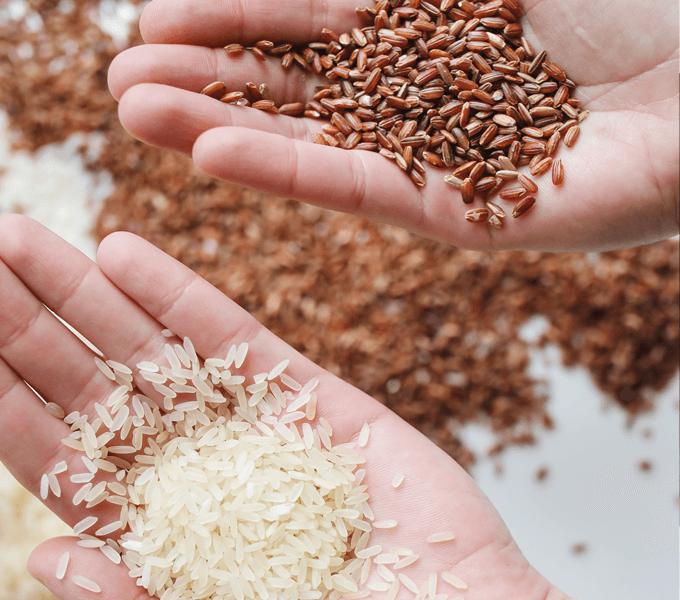 アメリカの様々な種類のお米